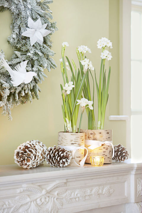 Amaryllis blooms may be tried-and-true, but you can mix it up with delicate paperwhites. Create your own white Christmas by wrapping the containers in birch bark and scattering snow-spritzed pinecones. Get the tutorial » What you'll need: paperwhite bulbs ($24, amazon.com), birch bark ($25, amazon.com)